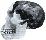 Пилтдаунский человек - находка древних времен
