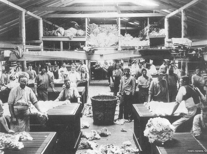 Сортировщики австралийской шерсти оценивают руно. Стада мериносов, потомков от 13 овец, привезенных из Кейптауна в 1797 г., составляли основу богатства страны в течение более чем 140 лет.