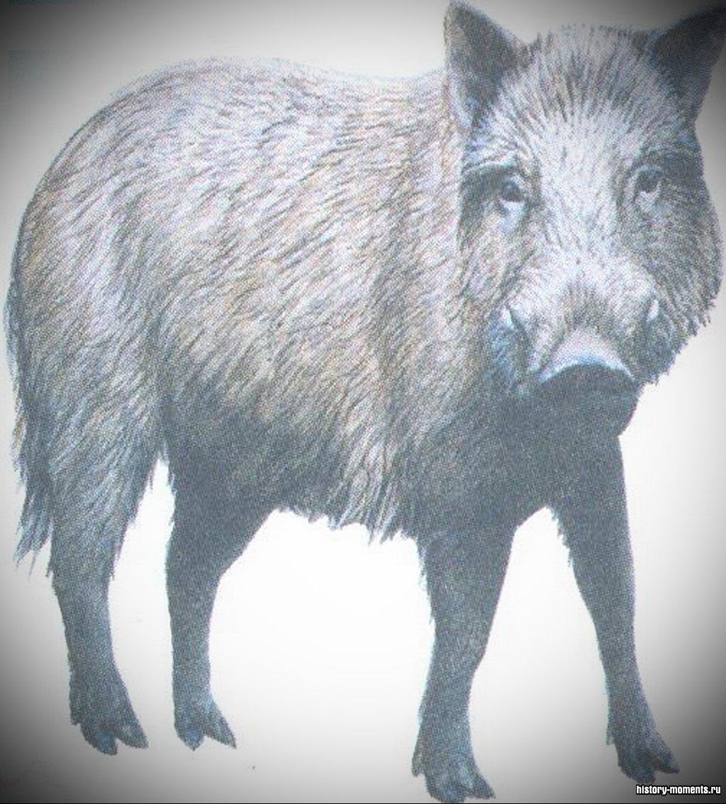 Охота на дикого кабана была когда-то любимым занятием европейских королей и знати. Сейчас в Европе дикие кабаны стали большой редкостью.