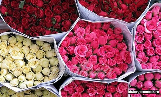 Розы оптом из Голландии