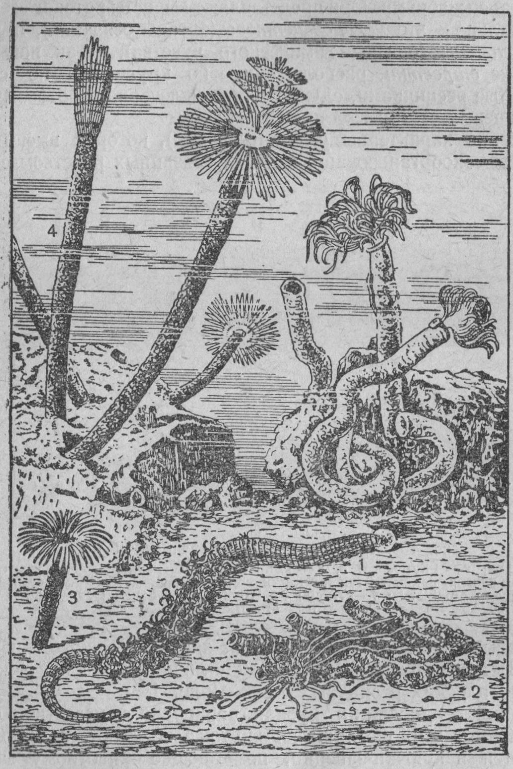 Рис. 137. Сидячие многощетинковые черви (полихеты):