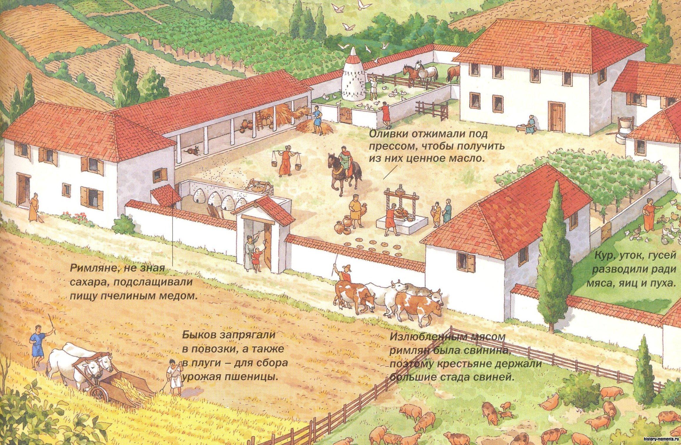 Земледельцы выращивали бобы и многие овощи, в том числе салат, редис, морковь.