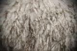 Интересные факты про шерсть и «Шестидневную войну»