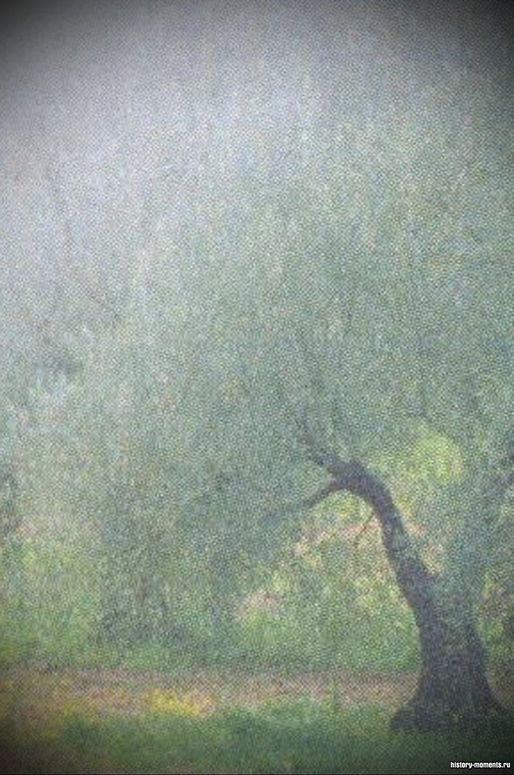 В лесах, протянувшихся вдоль средиземноморского побережья, растут каштаны, дубы, оливы и сосны.